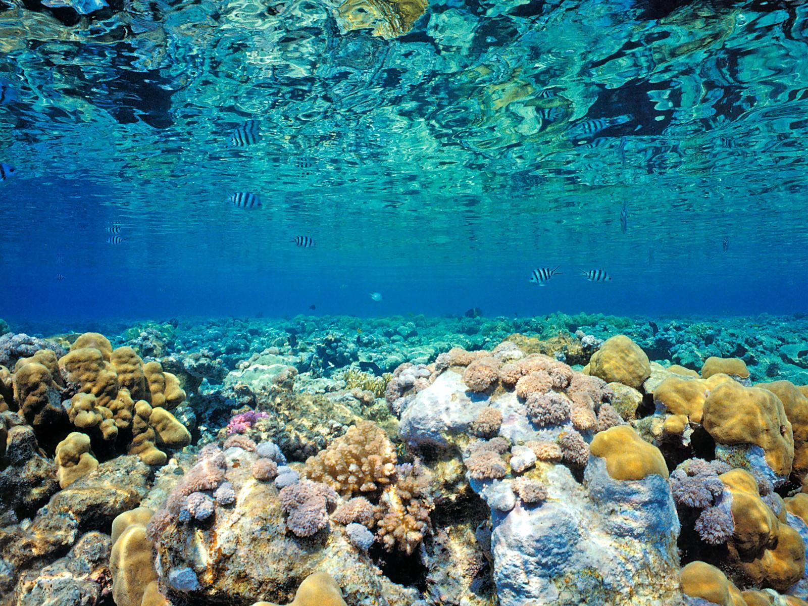 Blue Coral Sea Wallpaper HD 917 4039 Wallpaper High Resolution 1600x1200