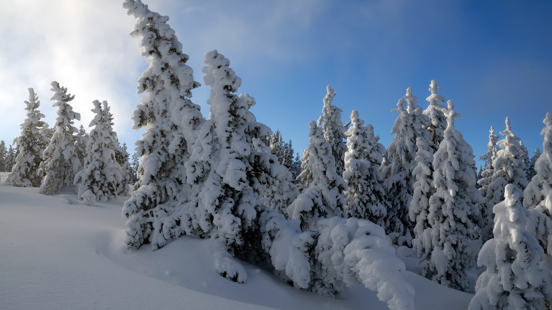 Snow Trees HDTV 1080p Wallpapers HD Wallpapers 1920x1080