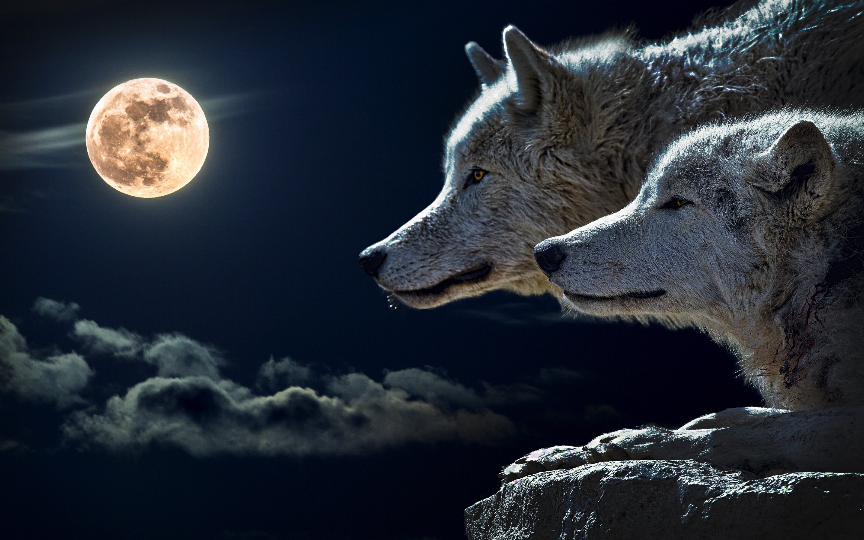 Most Inspiring Wallpaper Macbook Wolf - fpOyiE  Perfect Image Reference_545395.jpg