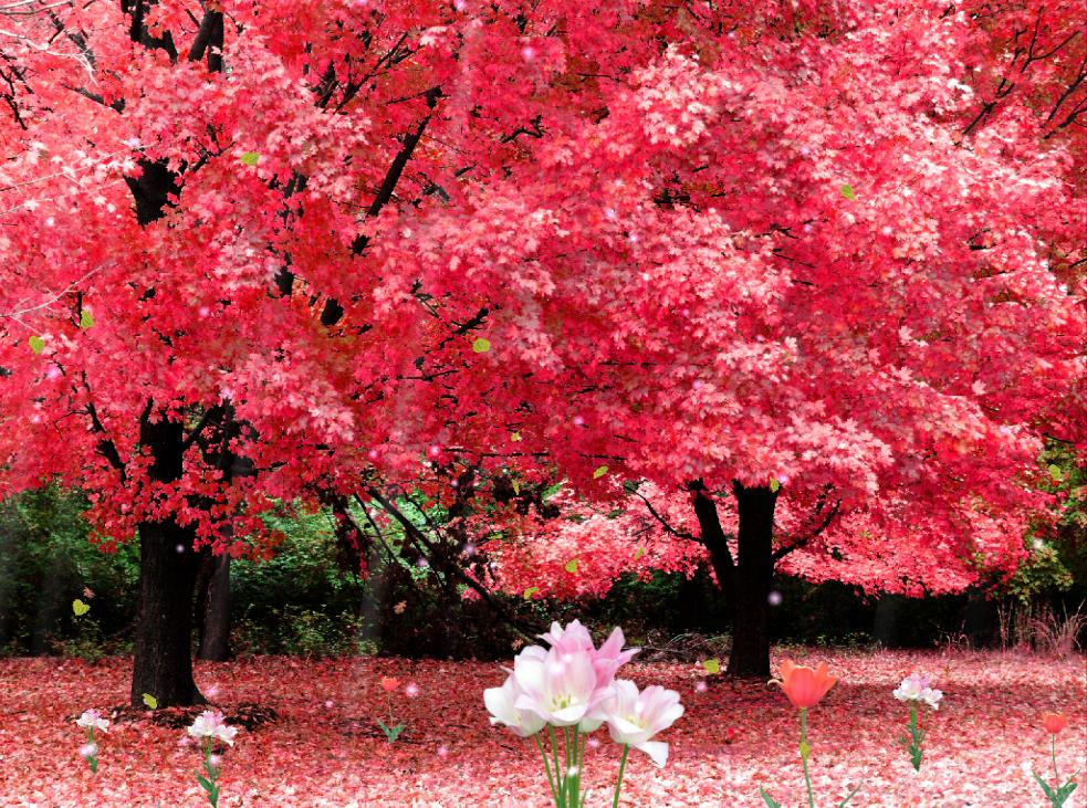 Beautiful Cherry Blossoms and Falling Petals 1 - Wallcoo.net