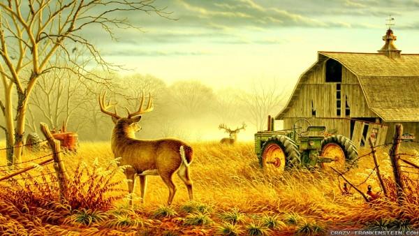Deer at an old farm wallpaper wallpapers   4K Ultra HD Wallpapers 600x338