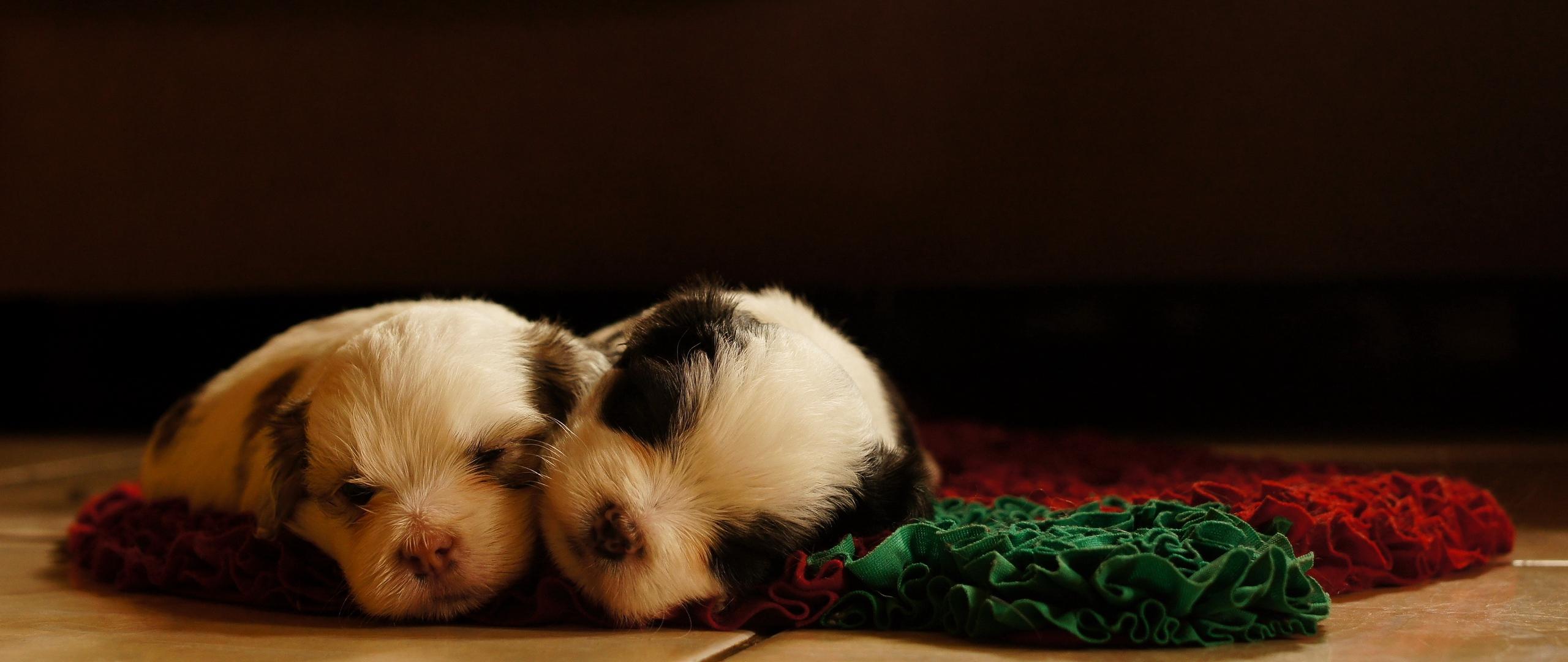 Download wallpaper 2560x1080 dogs puppies sleeping lying 2560x1080