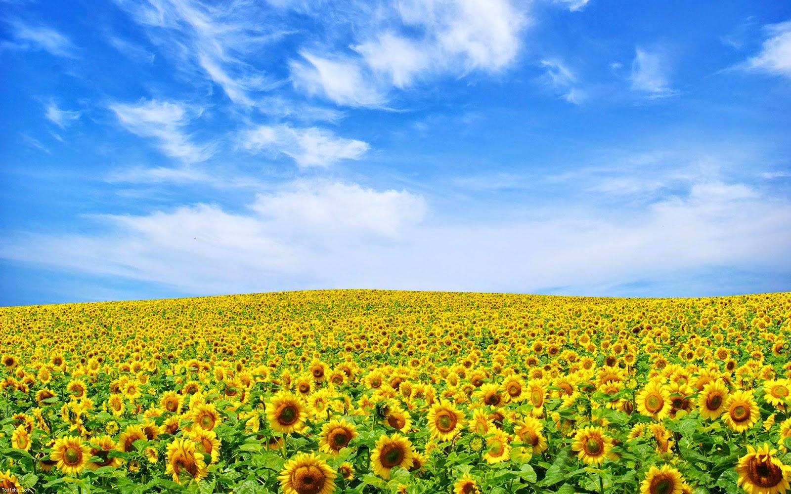 Download Wallpaper   Flower Landscape 118977   HD Wallpaper 1600x1000
