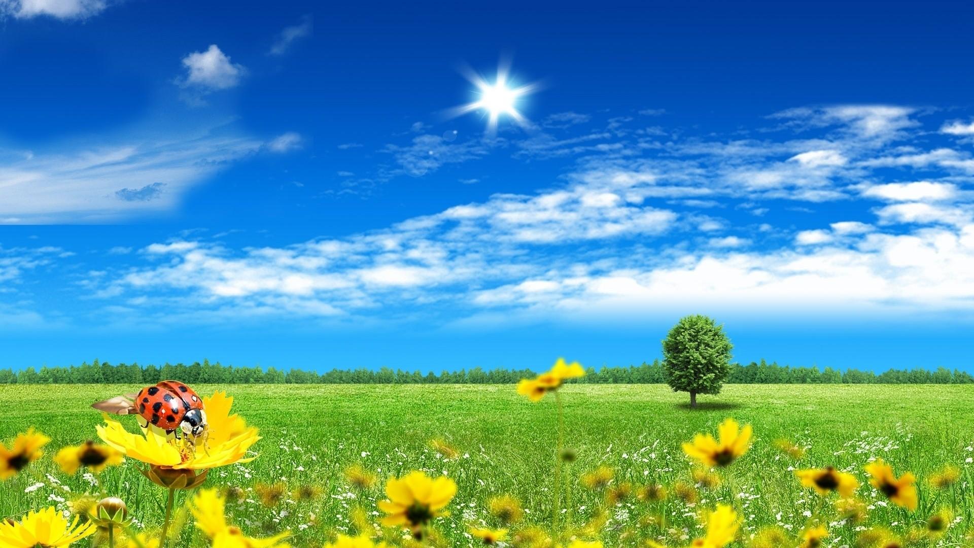 Beautiful Nature Spring Scenes Wallpaper HD 1920x1080