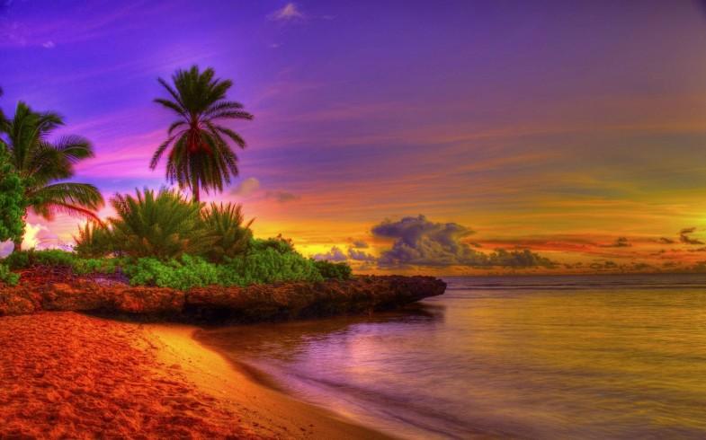 Sunrise Tropical Beach 15592 Wallpaper Hd 785x490