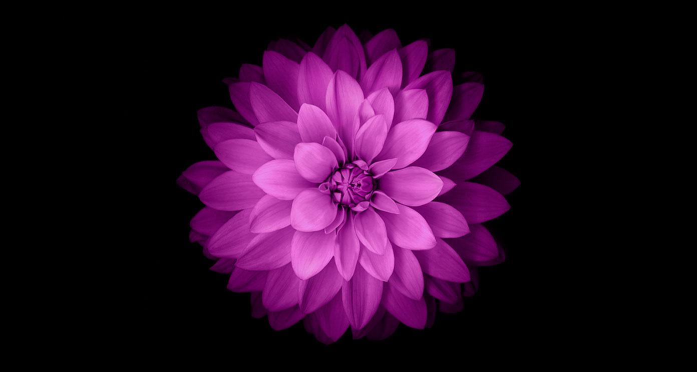 50+ Purple Flower Wallpaper for iPhone on WallpaperSafari