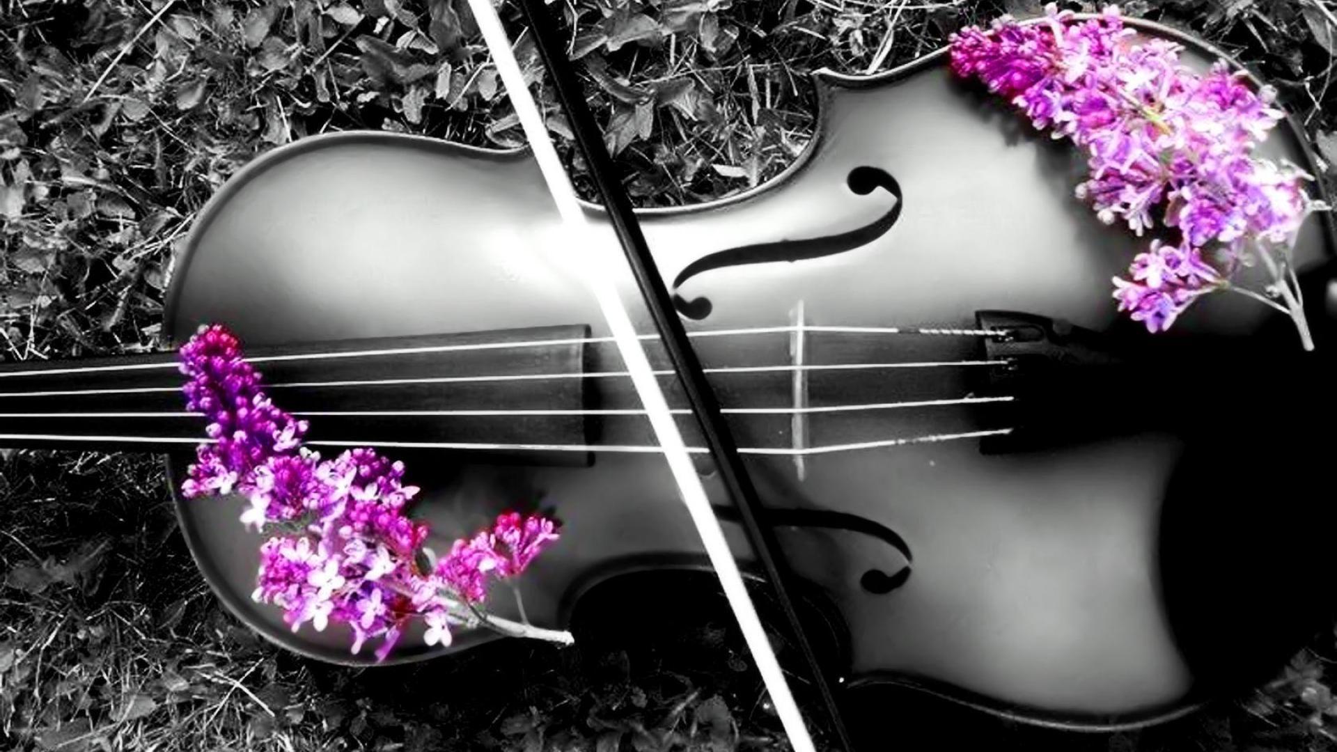 Cello Wallpaper Photo 22287 Hd Pictures: 1920x1080px Violin Wallpaper