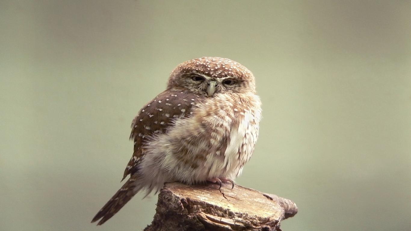 [73+] Cute Owl Wallpaper on WallpaperSafari