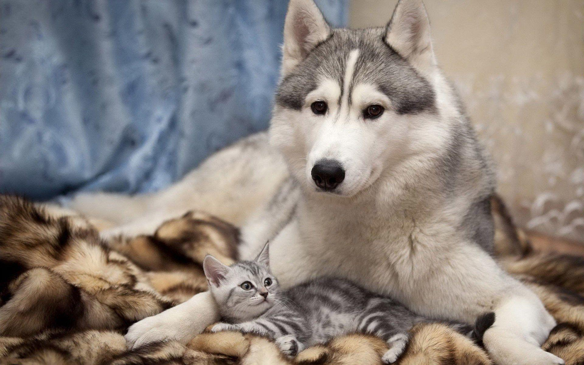 Dog And Cat Wallpapers 1920x1200