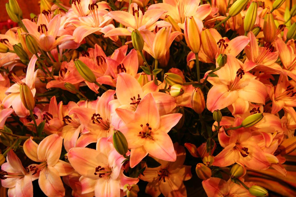 Autumn Flowers 1152x768
