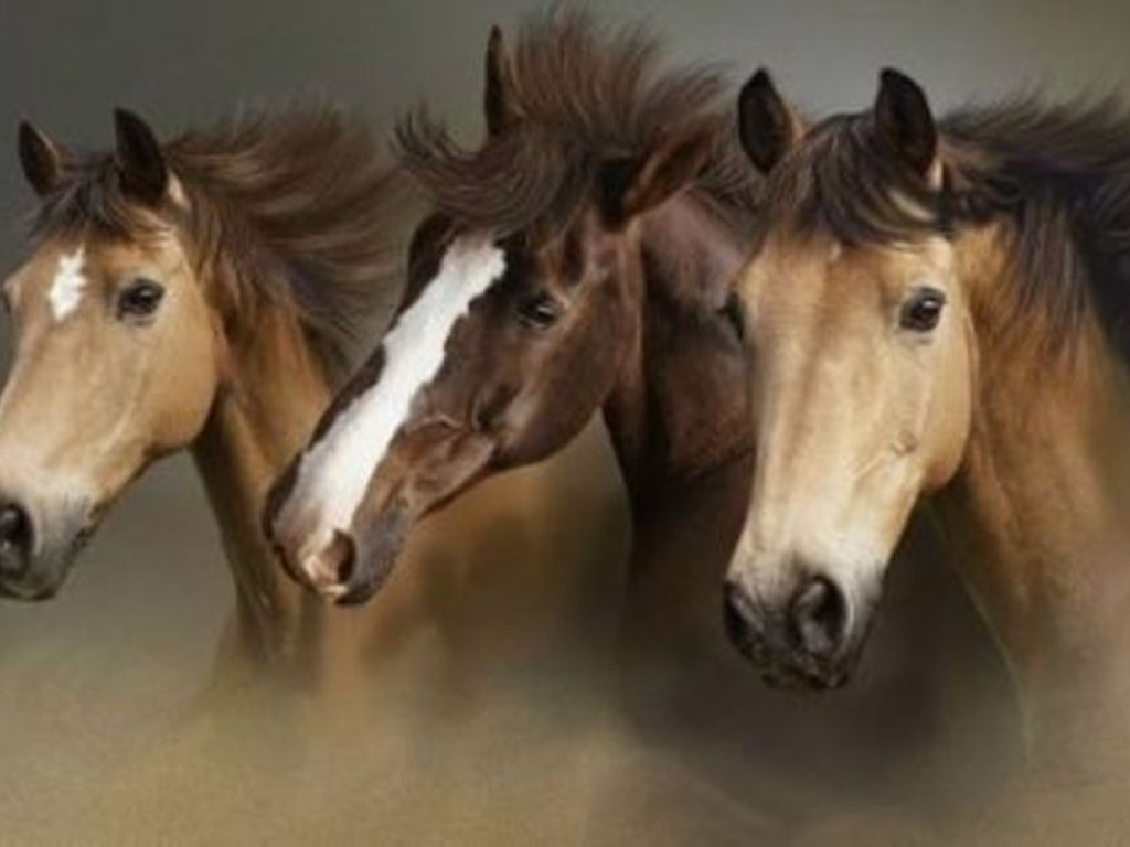 Free Download Beautiful Wallpapers Wild Horses Wallpapers