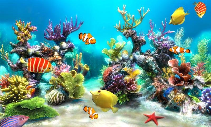 Sim Aquarium Live Wallpaper   Android Apps on Google Play 800x480