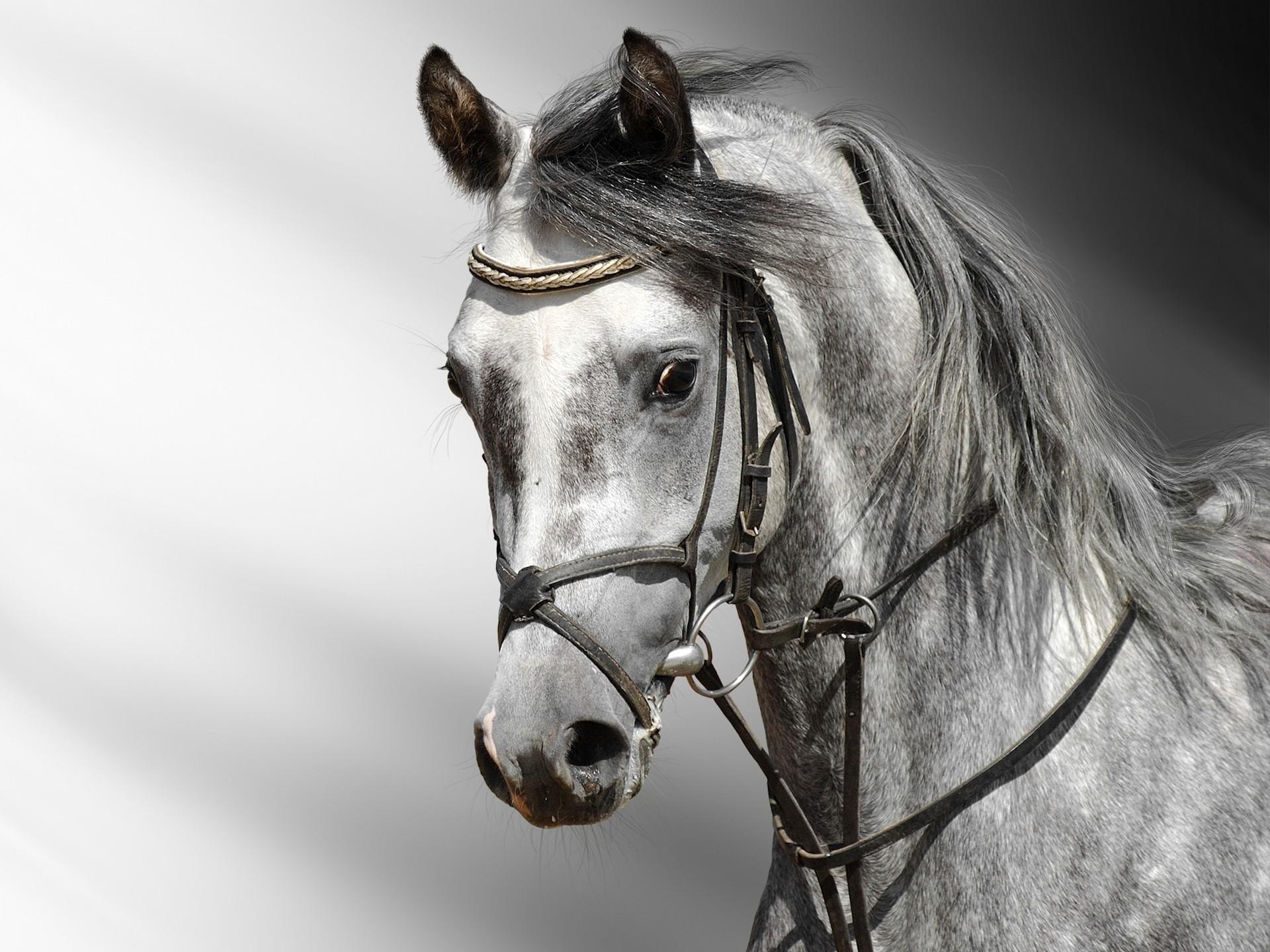 File Name Horse Desktop Wallpaper HD Chainimage 1920x1440