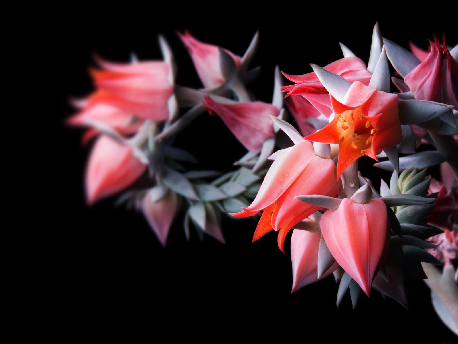 50] Black Flower Wallpaper on WallpaperSafari 1600x1200