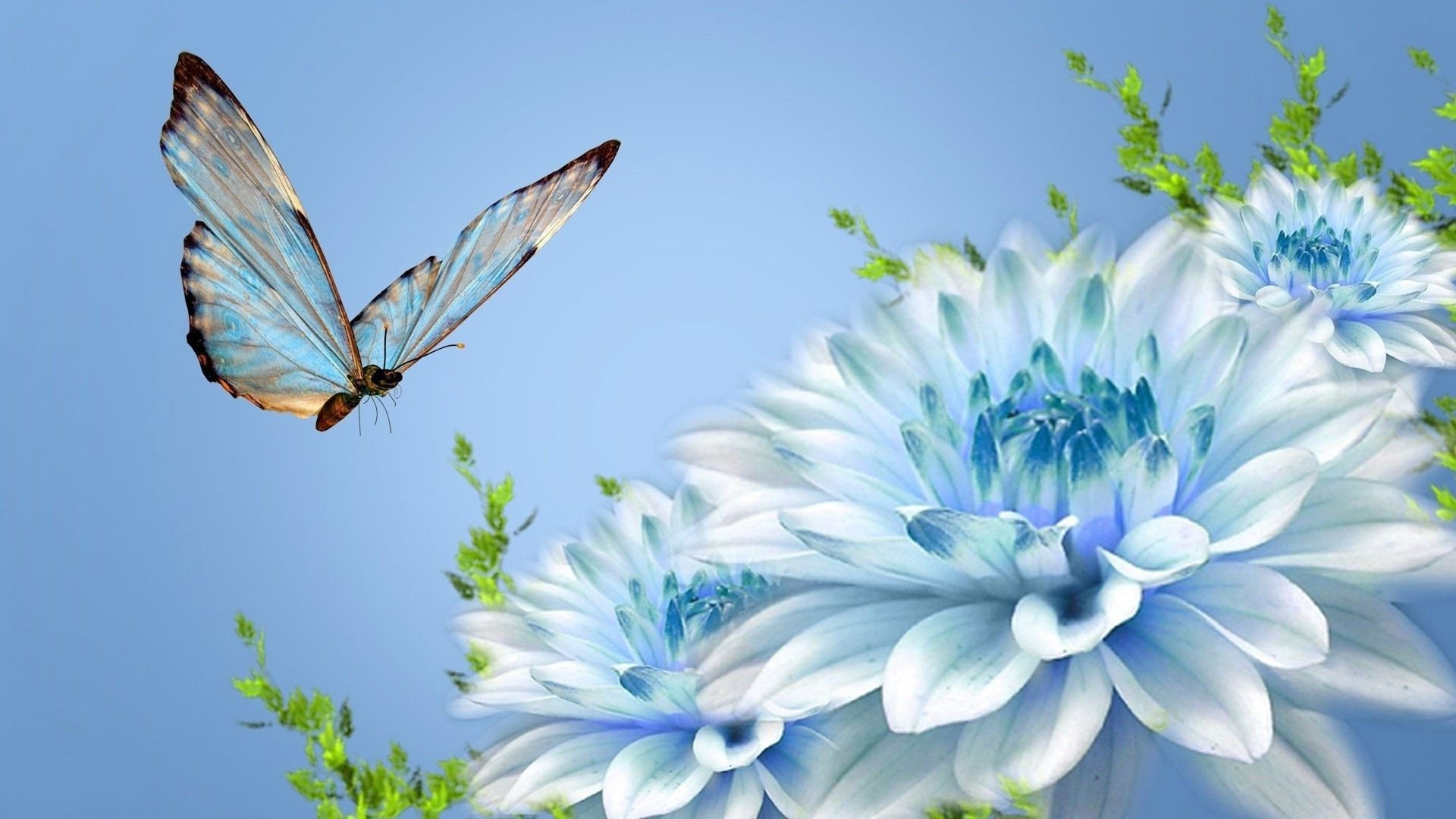Бабочки подлетающие к цветкам  № 2991696  скачать