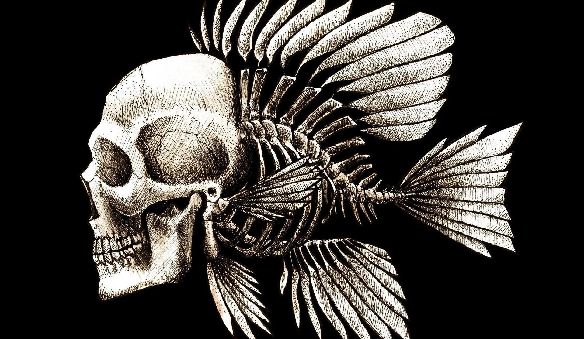 Skulls Humor Fish Artwork Charles Darwin Bones Seaman Wallpapers 1920x1116