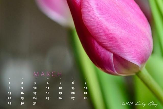 shirley   behind the lens March 2015 Desktop Calendar   Download 640x427