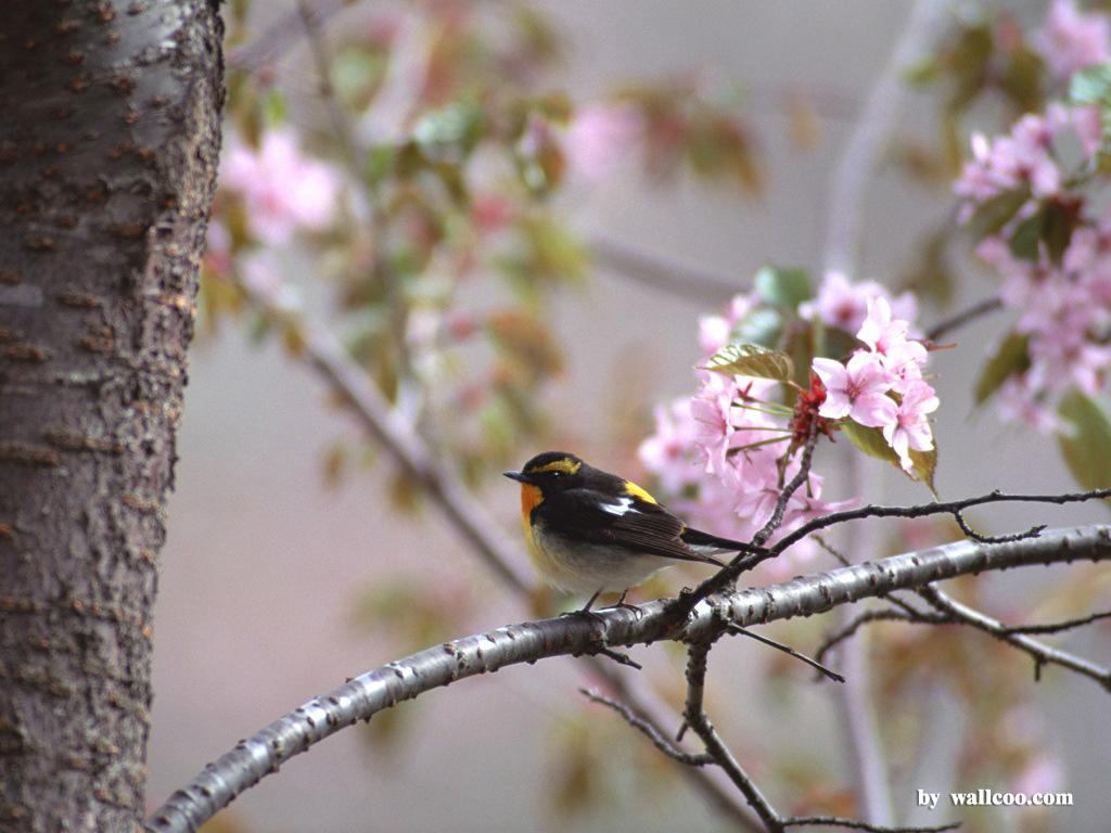 Birds Wallpaper   Lovely Bird in Spring Vol1 1024x768 NO15 Desktop 1024x768