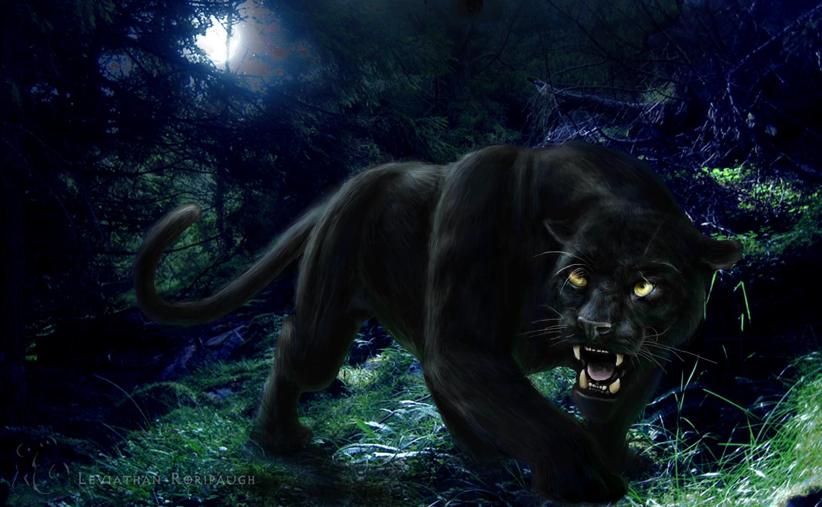 Black Panther HD Wallpapers black panther wild animal wild black 1600x987