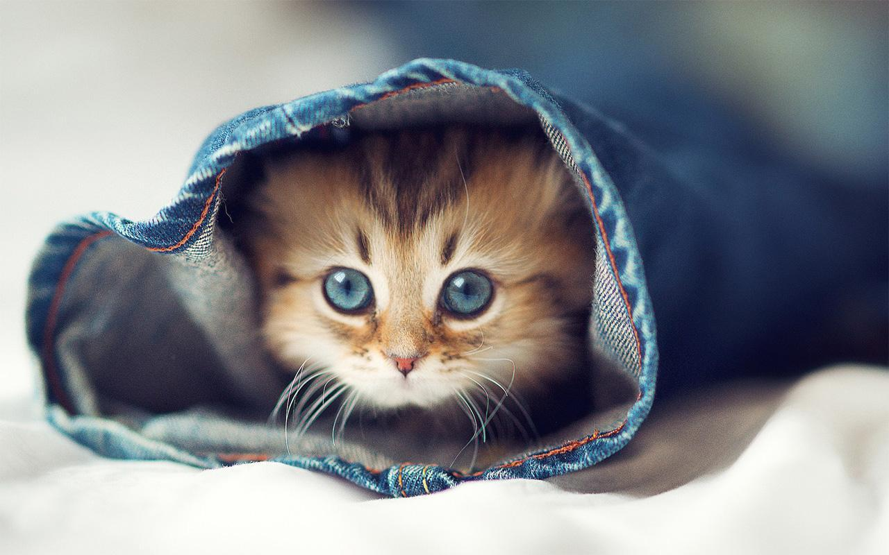 Cute Baby Animal Pictures Wallpapers 1280x800