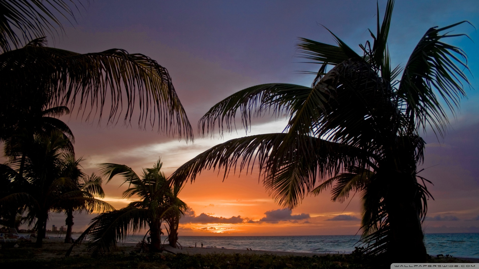 Sunset Palm Trees Wallpaper Wallpapersafari