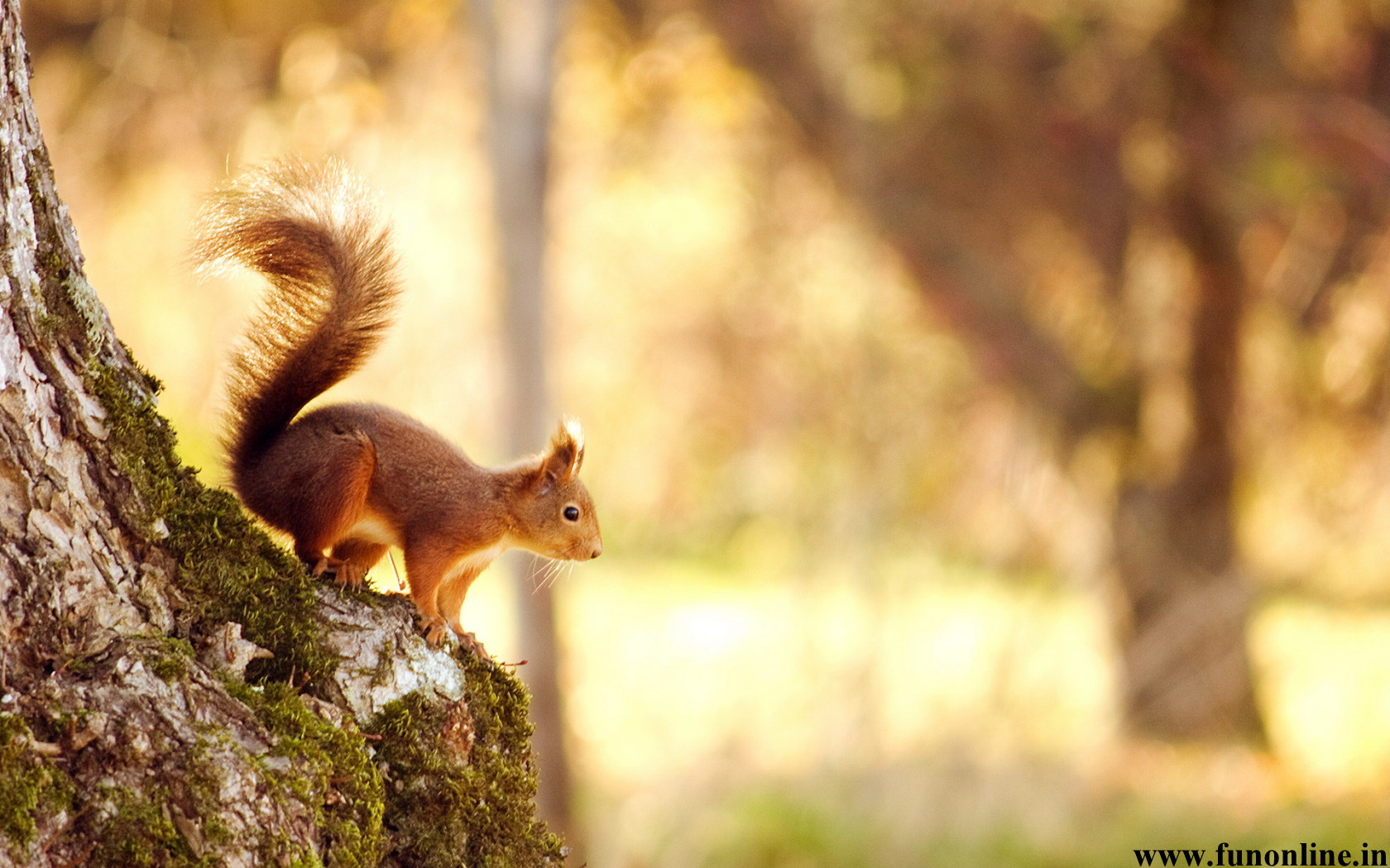 Squirrel Wallpapers Download Charming Squirrels HD Wallpaper 1680x1050