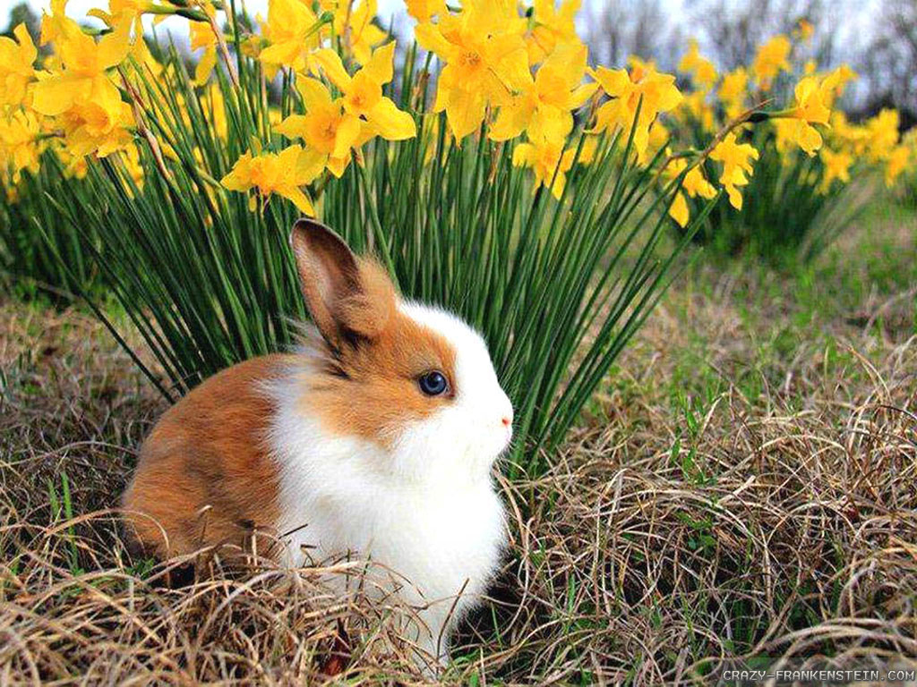 Wallpaper Spring Animals Wallpapers 1024x768