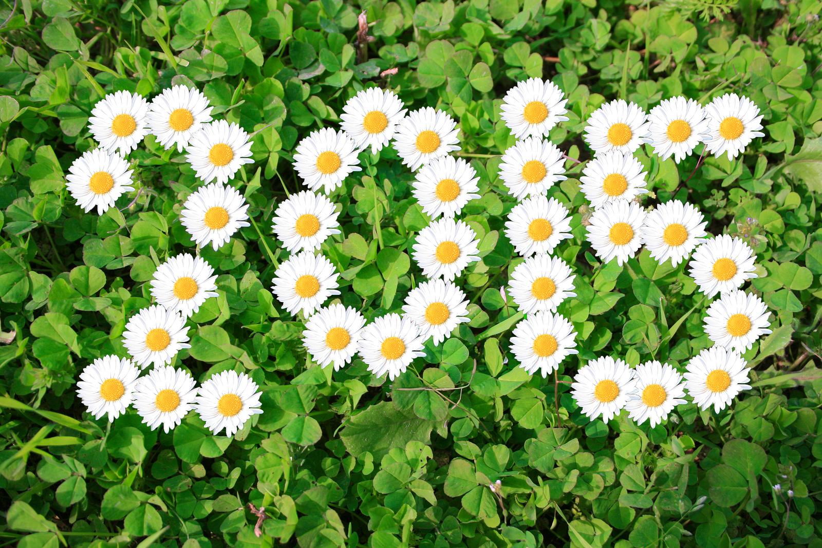 Beautiful Happy New Year 2015 Flowers Wallpaper Picture Desktop 1600x1067