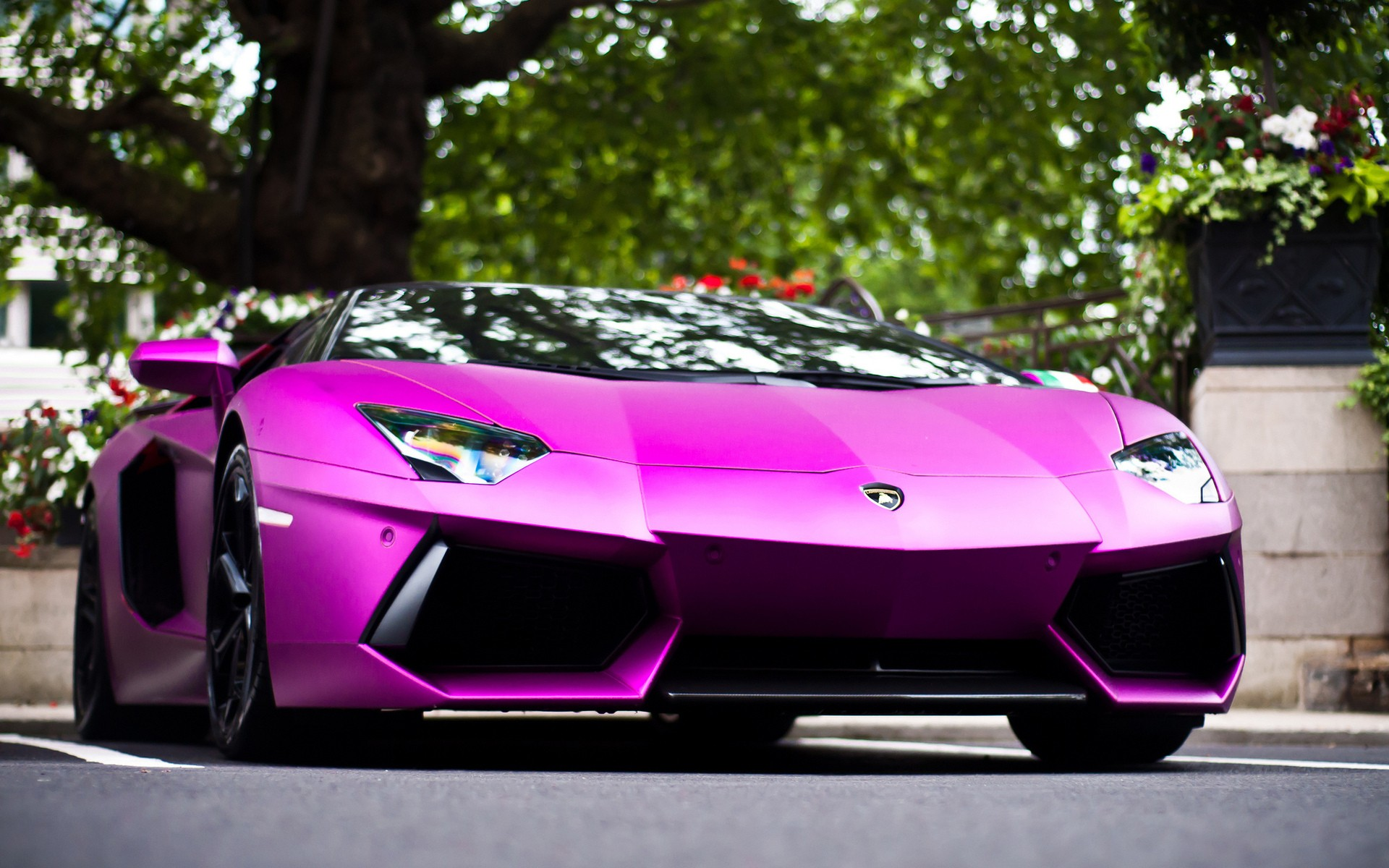 Lamborghini in Pink Google Themes 1920x1200