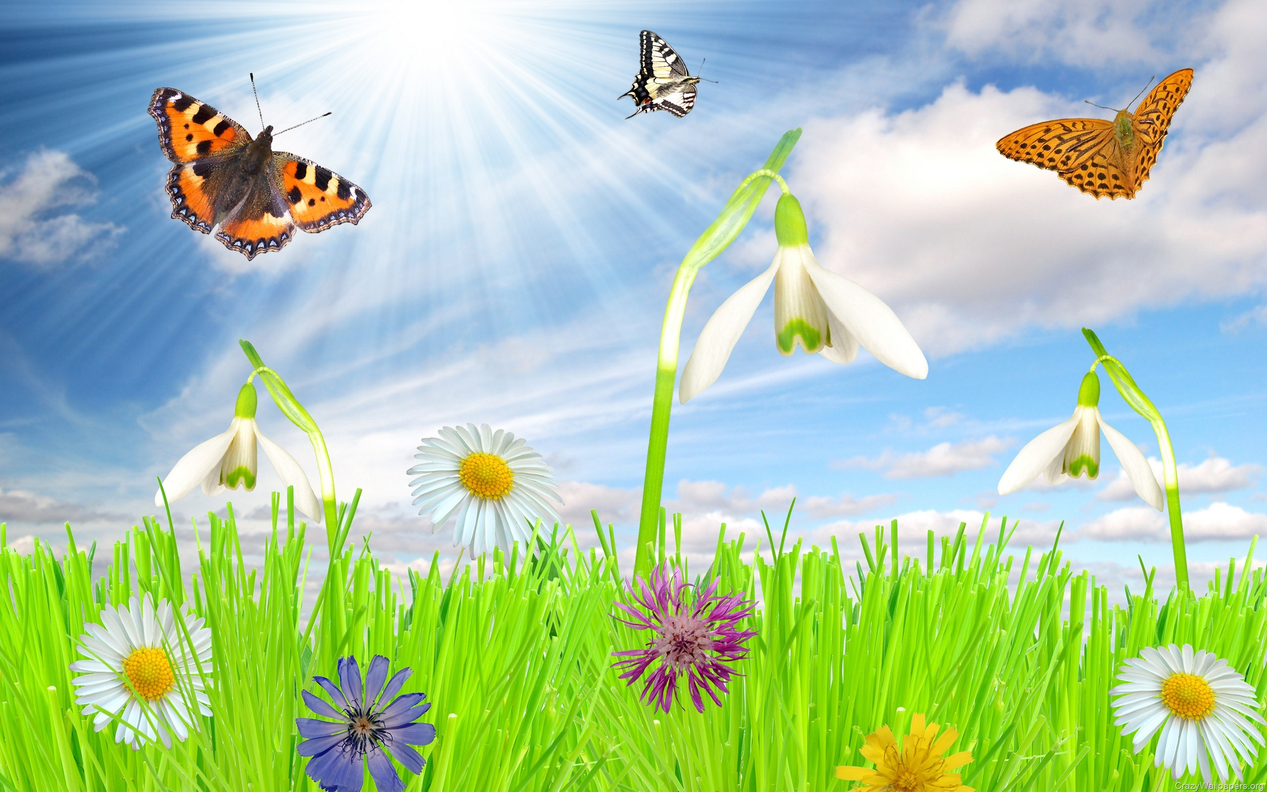 Spring Wallpapers And Screensavers 2560x1600