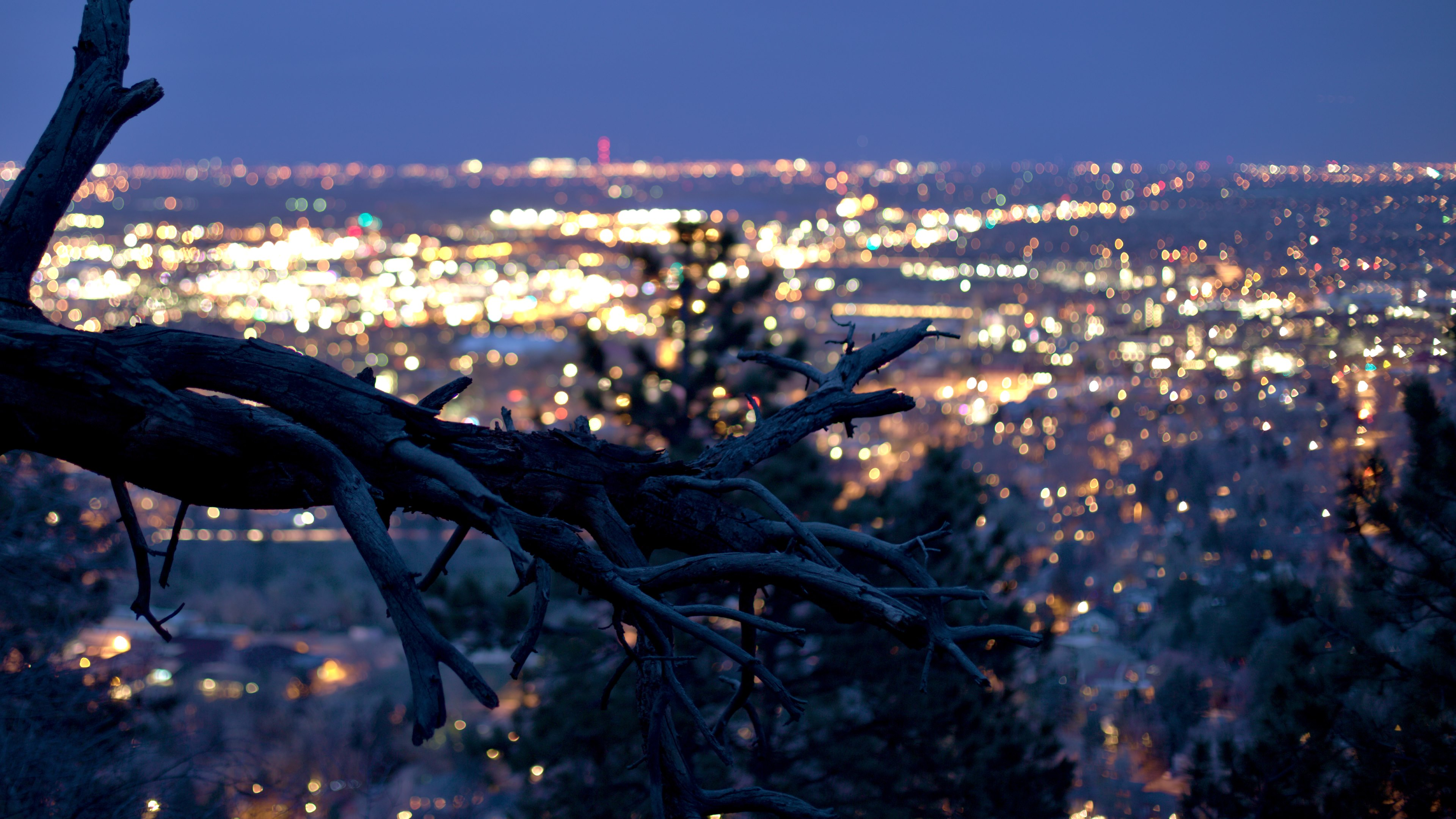 Hot Wallpaper Dry tree with the city lights in background 3840x2160