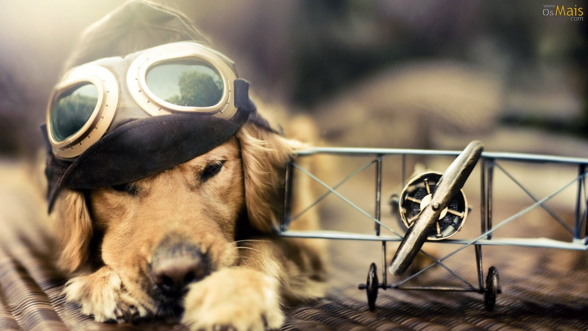 Aviator Dog   Doge Wallpaper 1920x1080 70309 1920x1080