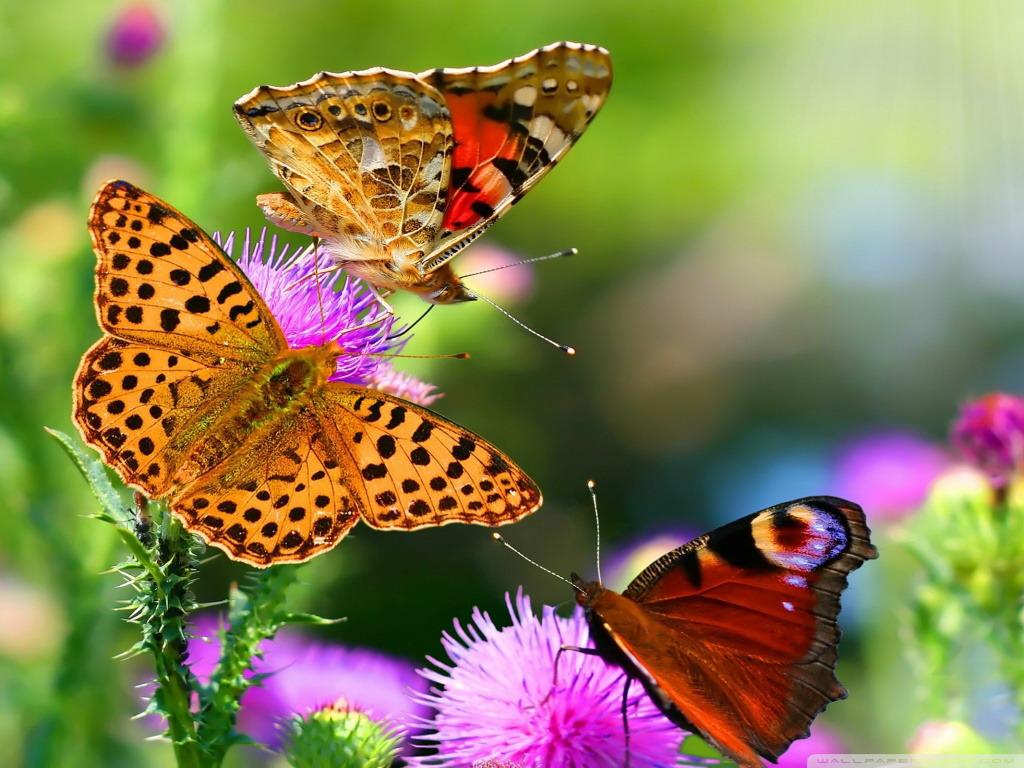 Butterflies Flowers Wallpaper | HD Wallpaper