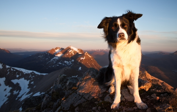 Wallpaper border collie dog view mountain wallpapers dog   download 596x380