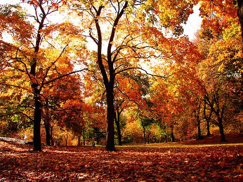 Central Park Fall foliage Central Park Fall foliage Flickr   Photo 500x375