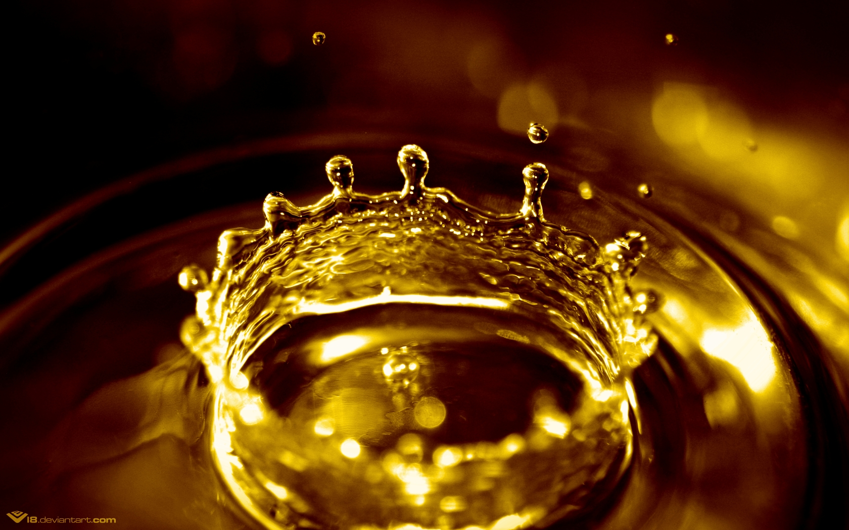 crown of rain water drops widescreen HD Wallpaper of Nature 1680x1050