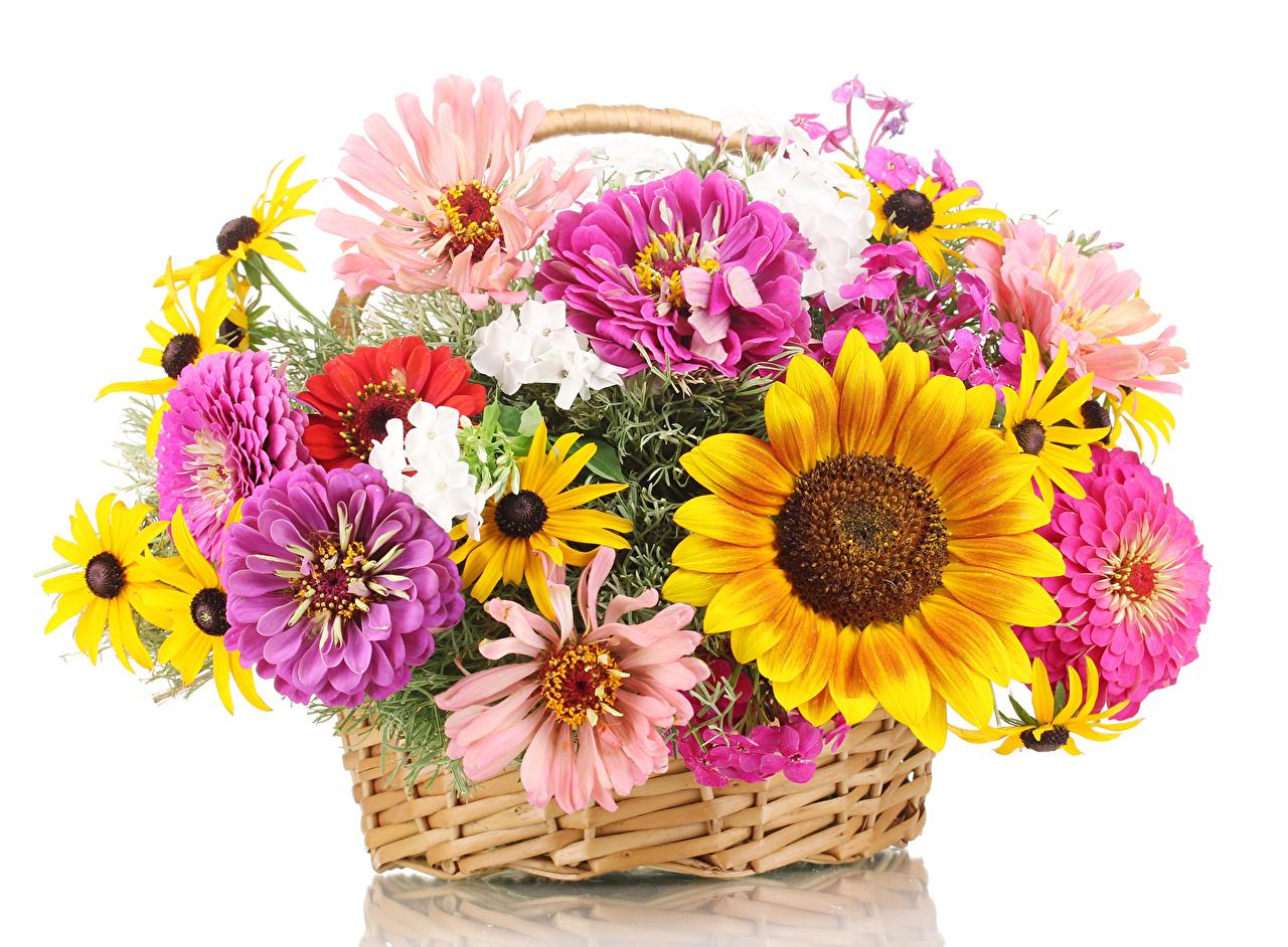 Photos Bouquets Zinnia Flowers Sunflowers Wicker basket White 1280x942