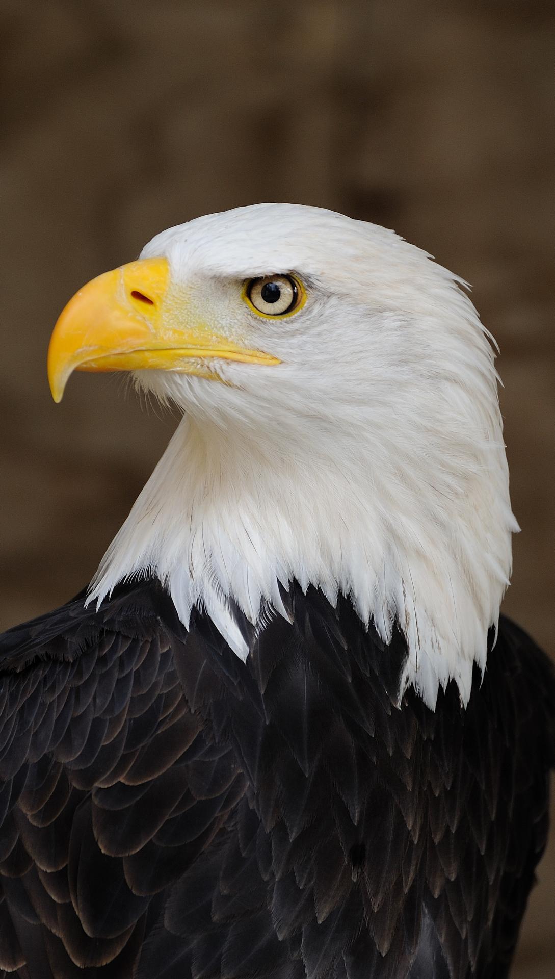American Eagle Hd Wallpaper American eagle preview 1089x1920