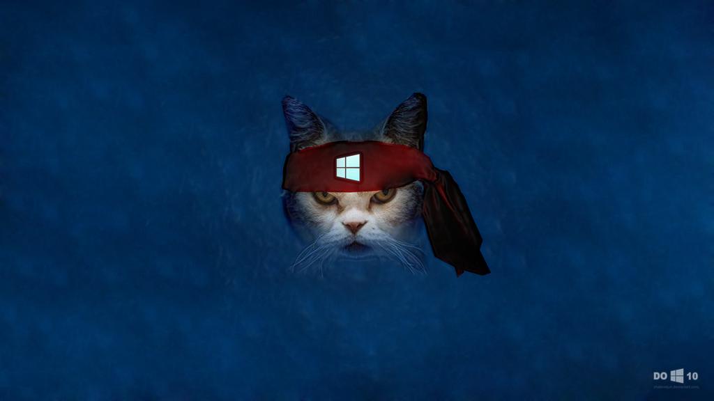 49 Windows 10 Ninja Cat Wallpaper On Wallpapersafari