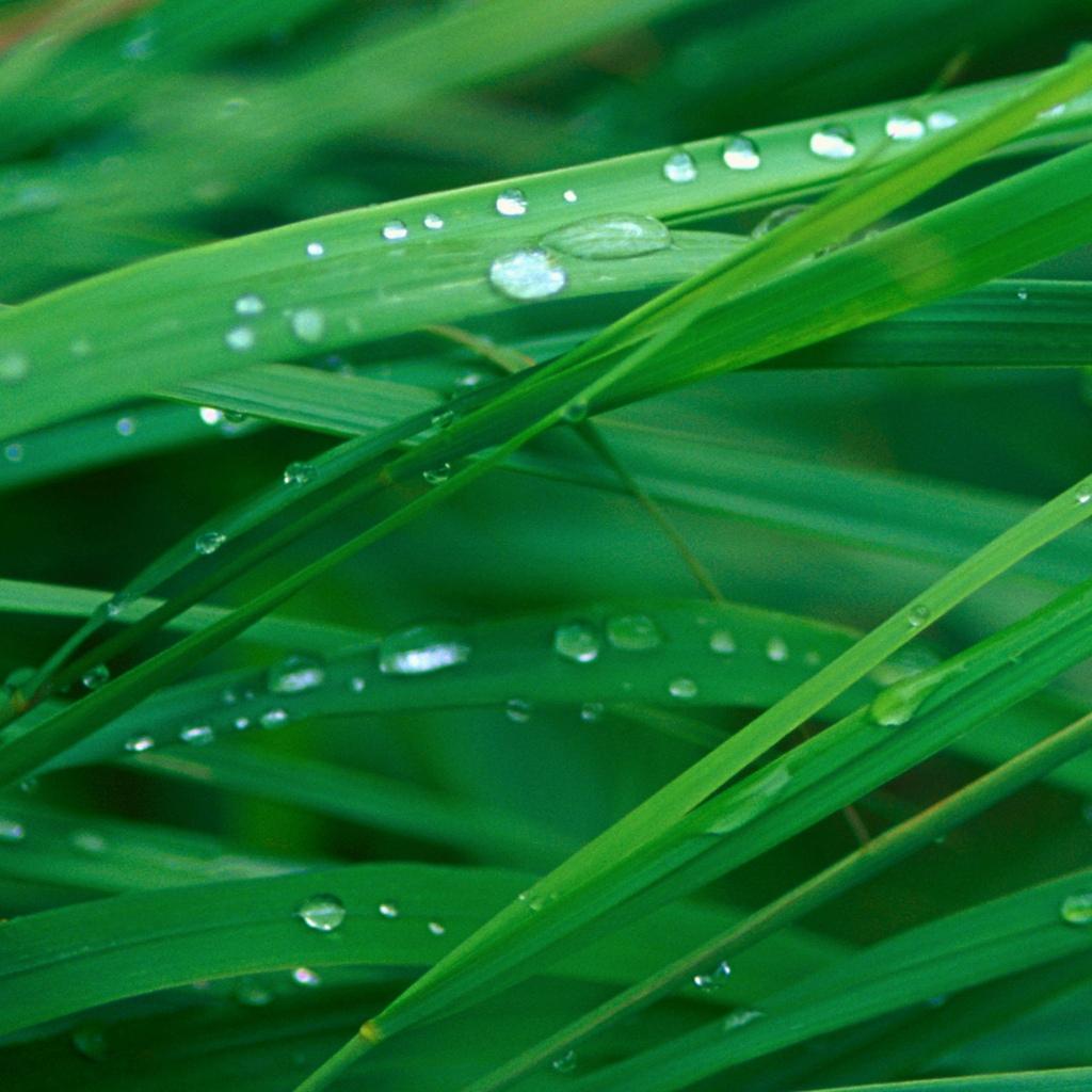 Grass Blades iPad Tablet Wallpaper iPad Retina HD Wallpapers 1024x1024