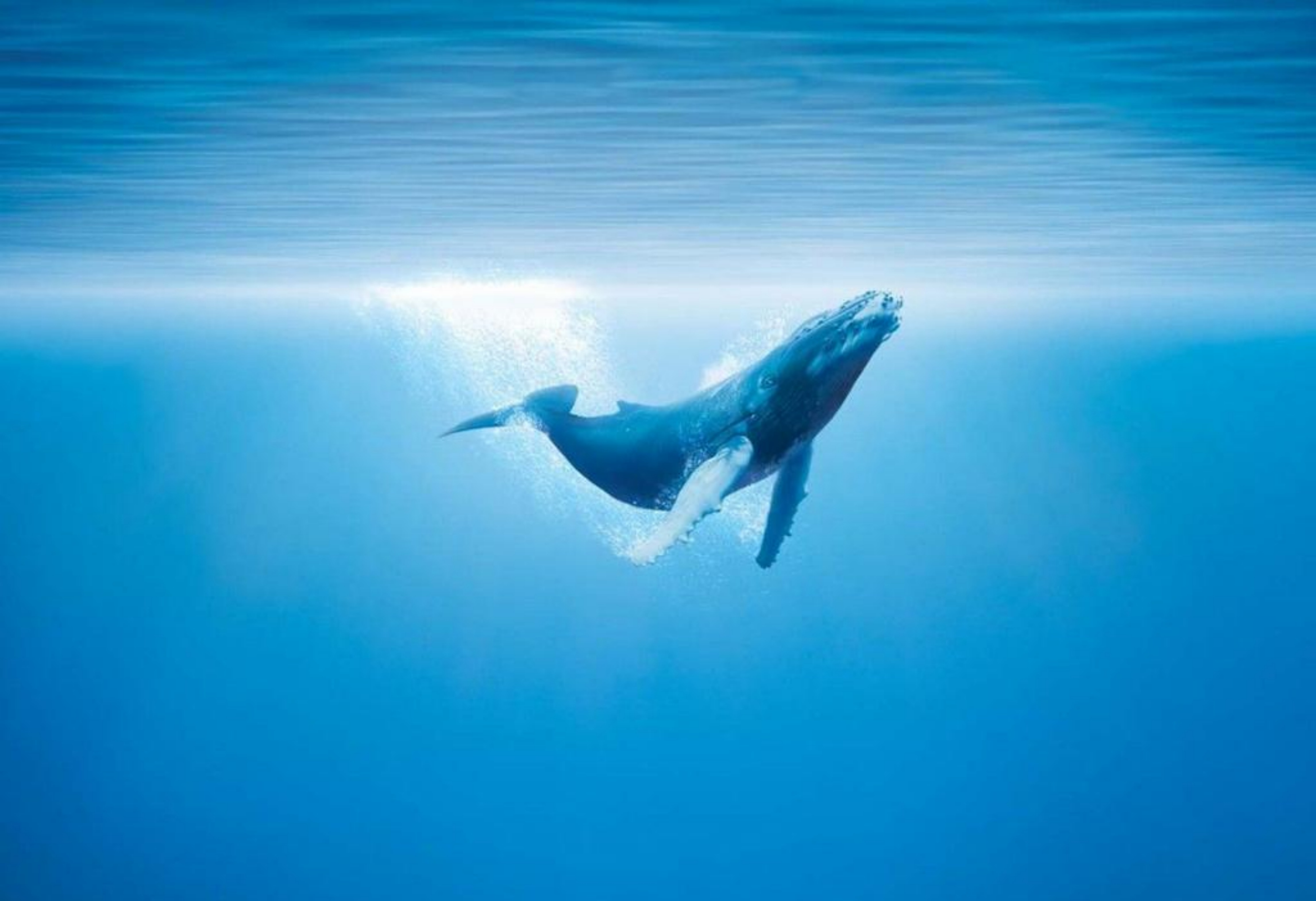 Wallpapers For Whale Wallpaper 4581x3136