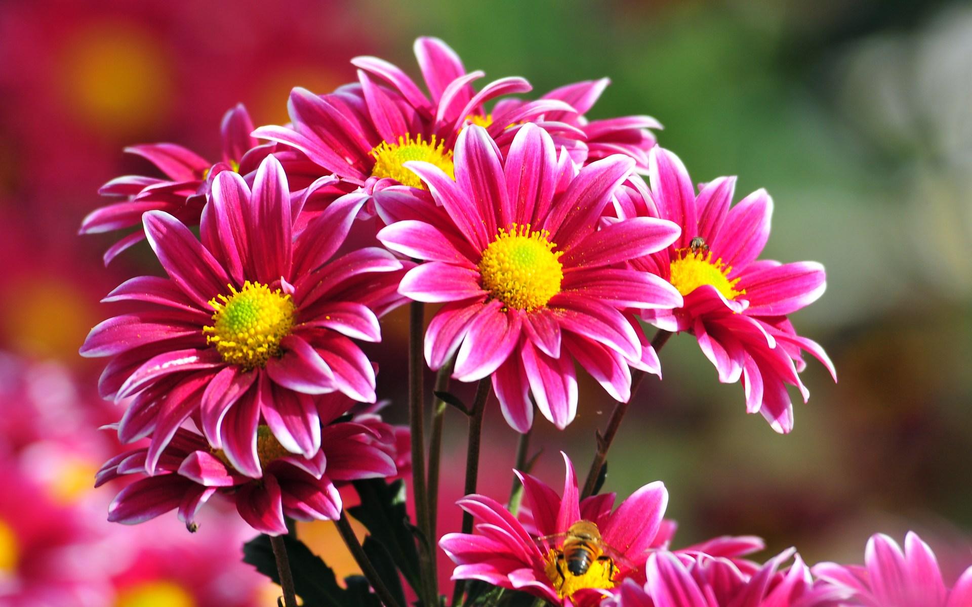 Fotos de flores para salvapantallas 25