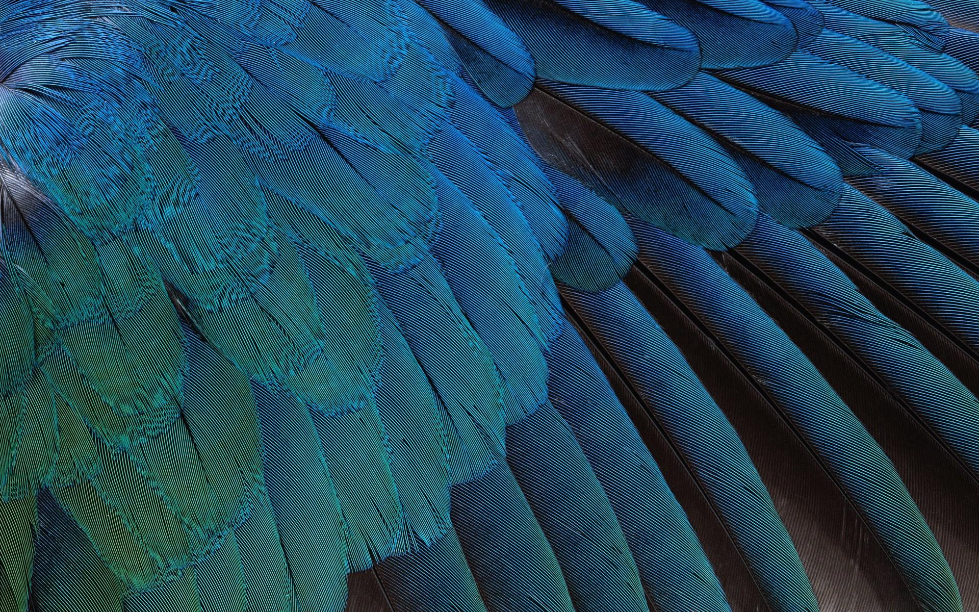 Bird Feather Wallpaper 1920x1200