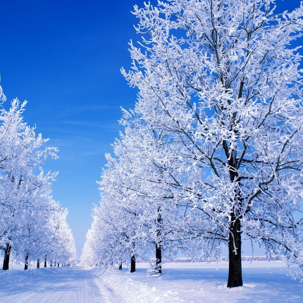 [47+] Snowy Winter Scenes Wallpaper on WallpaperSafari