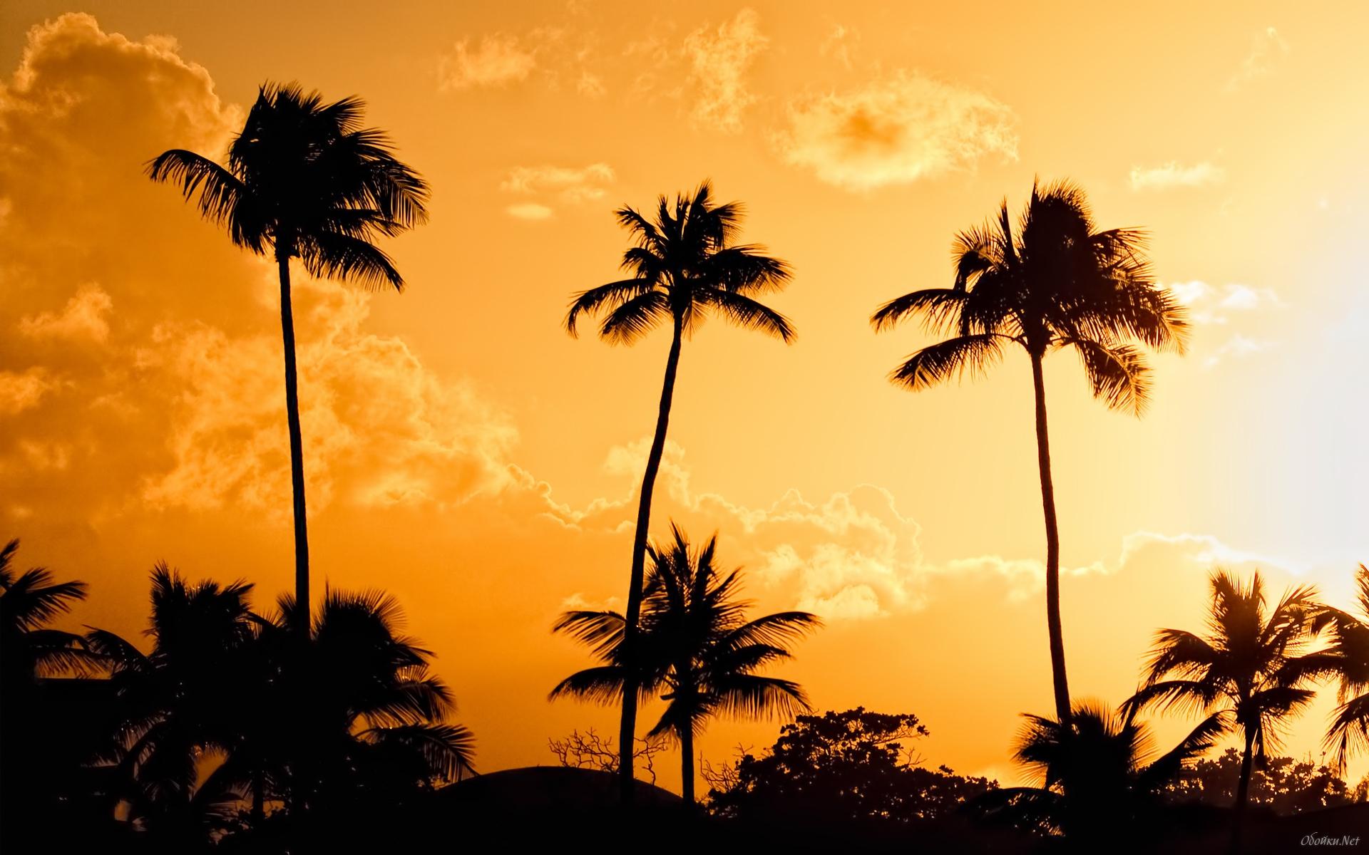 Palm trees at sunset background wallpaper HD Desktop Wallpaper 1920x1200