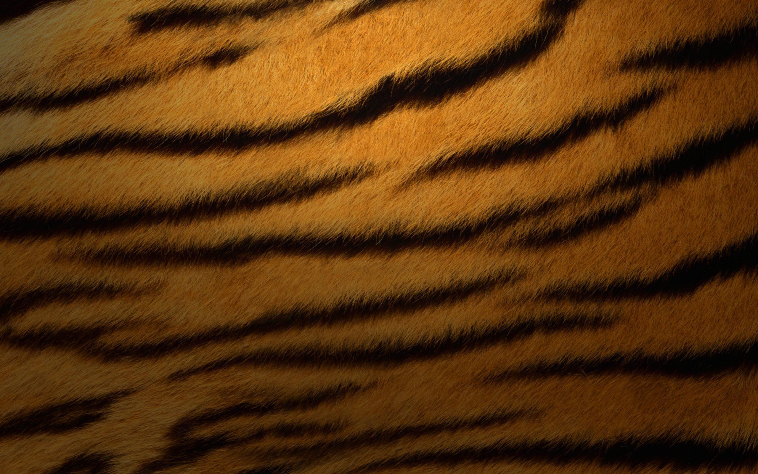 Tiger Fur Wallpaper - WallpaperSafari