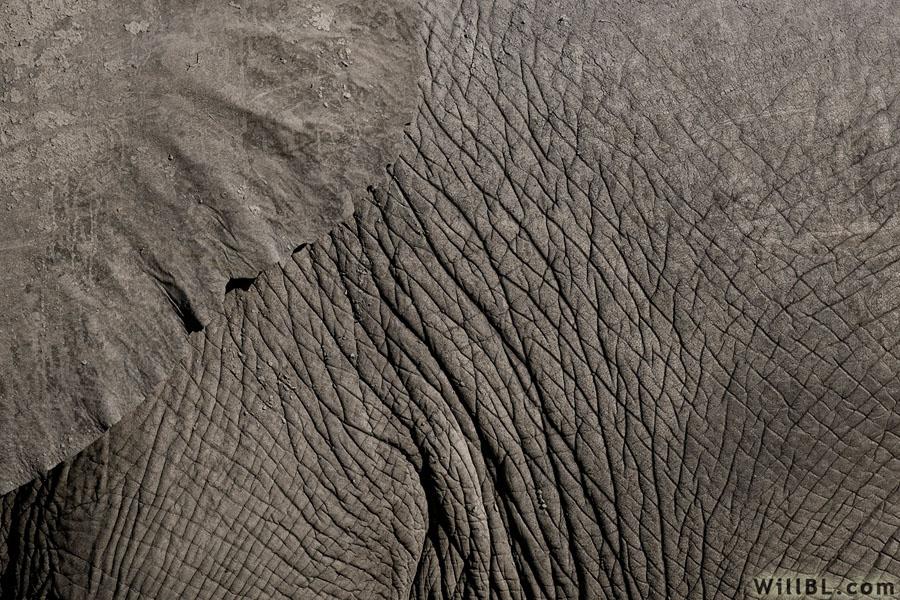 Elephant Skin by willbl 900x600