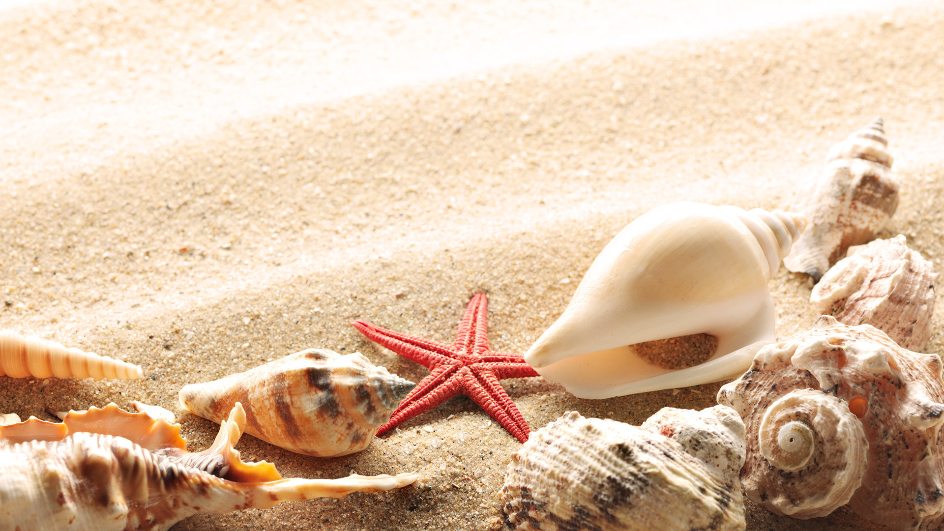 Wallpaper Seashells Summer Beach Sand Sun Theme Macro Download 132777 1920x1080