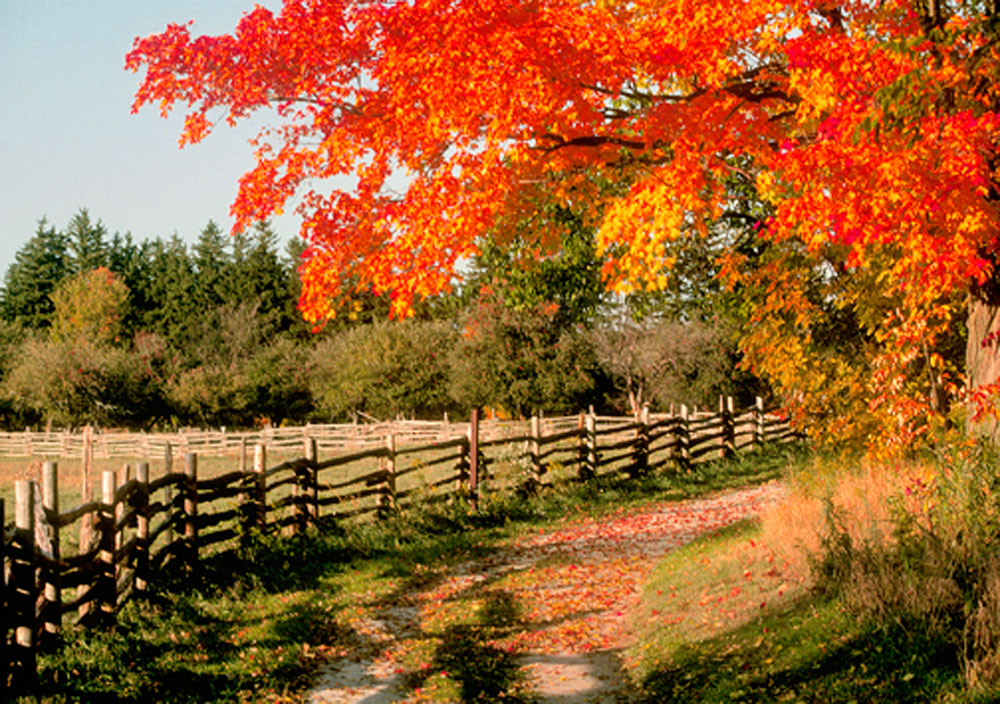 Country Love Wallpaper: Country Fall Wallpaper
