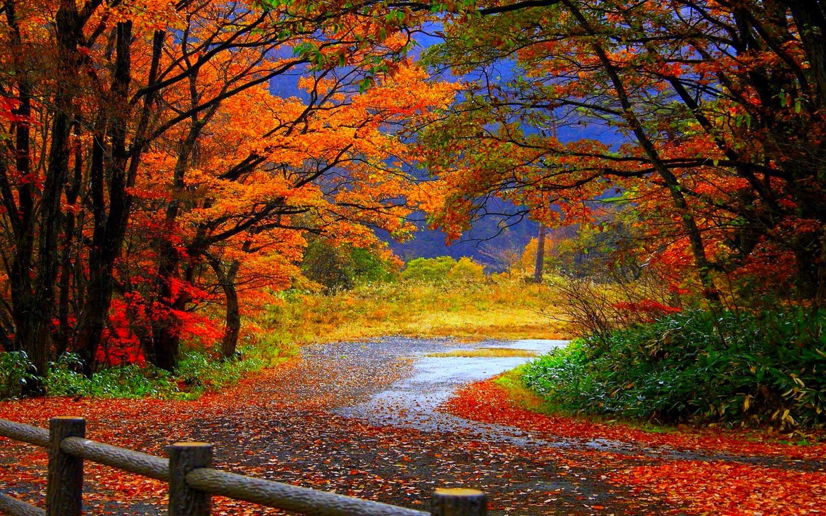 autumn wallpapers hd autumn morning wallpaper autumn wallpapers hd 1680x1050